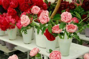 flower2-e1471360993289